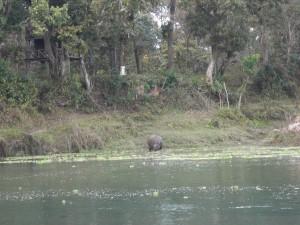Bild på noshörning.